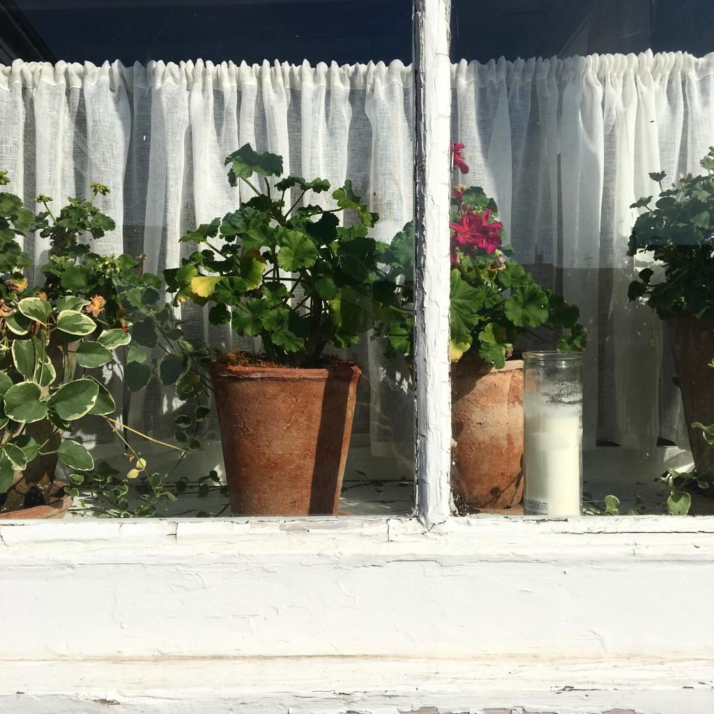 6. geraniums